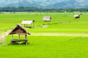 See Rice Fields in China on PMF Trip